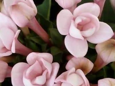 Bukiety kwiatów 12